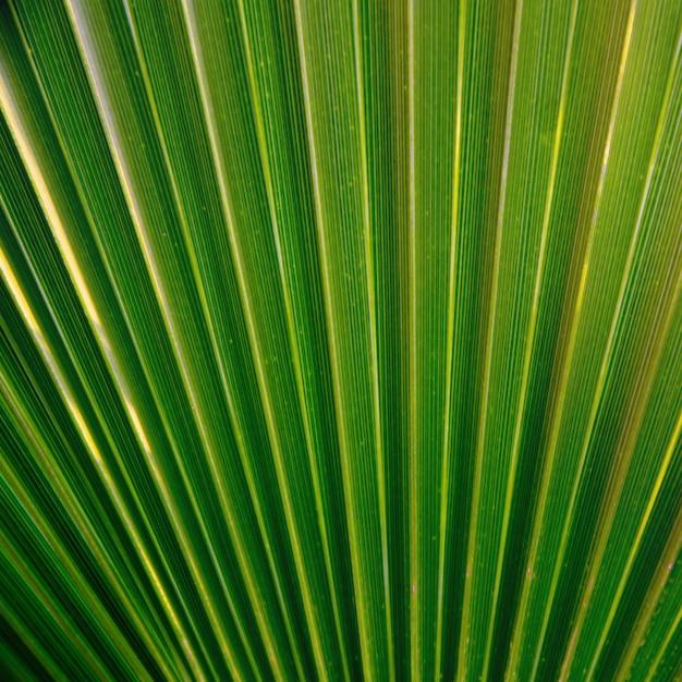 Texture de feuille de palmier vert. Photo Premium