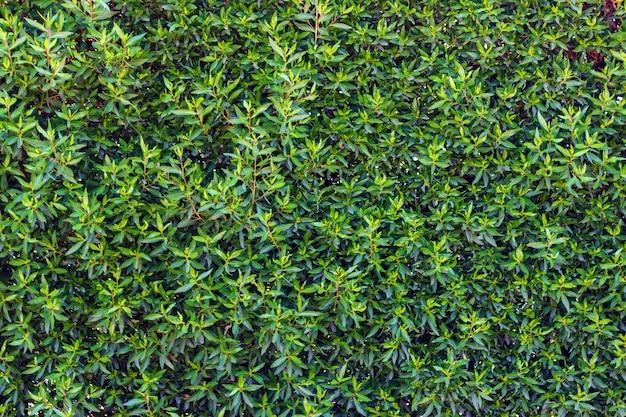 Texture de la feuille verte. feuille de texture d'arbre Photo Premium