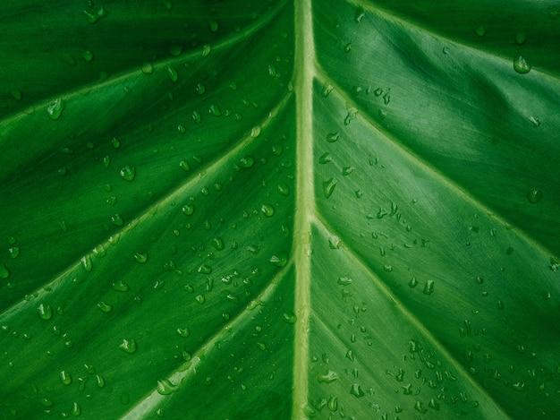 Texture de feuille verte / fond de texture de feuille Photo Premium