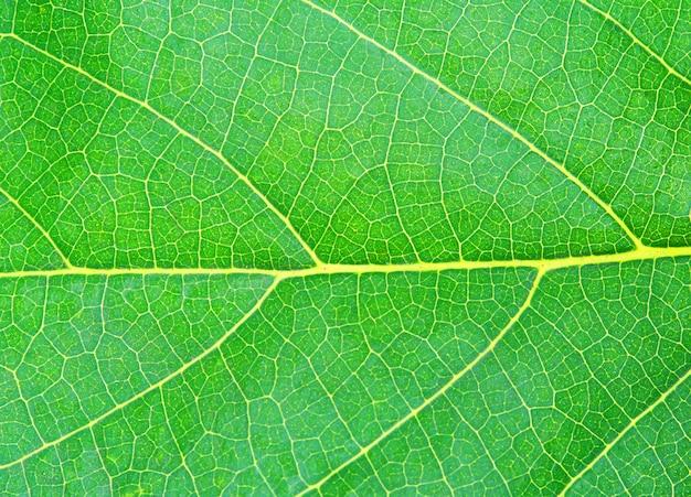 Texture de la feuille verte naturelle Photo Premium