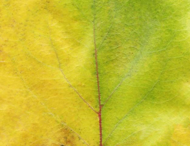 Texture des feuilles automnales abstraites colorées Photo Premium