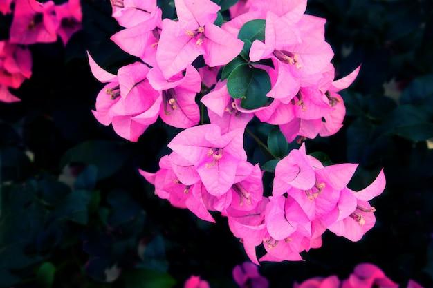 Texture de fond de fleur pourpre, fond naturel Photo Premium
