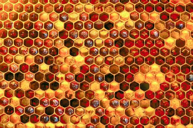 Texture De Fond Et Motif D'une Section De Nid D'abeille De Cire D'une Ruche D'abeilles Remplie De Miel Doré Photo Premium
