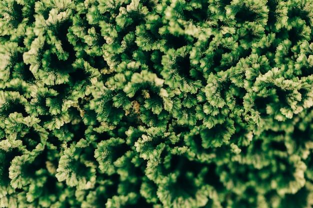 Texture de fond de plantes vertes Photo gratuit