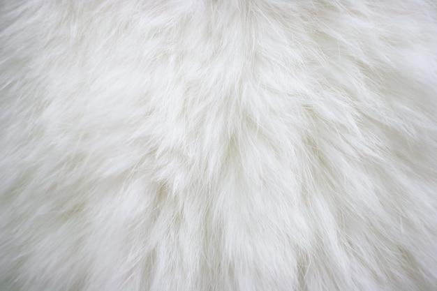 Texture De Fourrure Blanche Naturelle Aux Cheveux Longs. Photo Premium