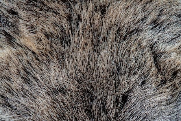 La texture de la fourrure d'un ours. peau d'un animal sauvage. Photo Premium