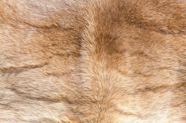 Texture de fourrure de renne colorée. Photo Premium
