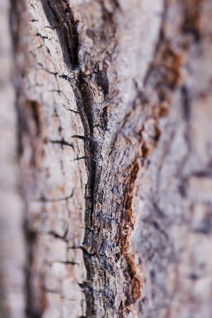 Texture de gros bois Photo gratuit
