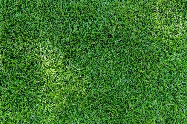 Texture d'herbe Photo Premium