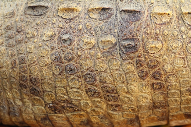 Texture de peau de crocodile Photo Premium