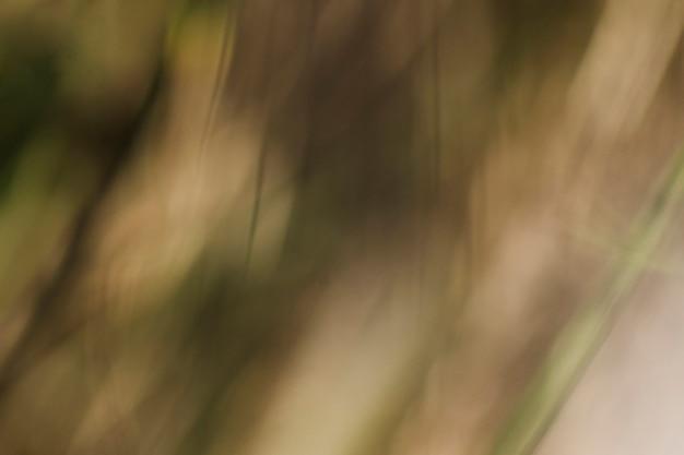 Texture des plantes floues Photo gratuit