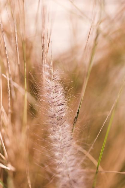 Texture des plantes en gros plan Photo gratuit