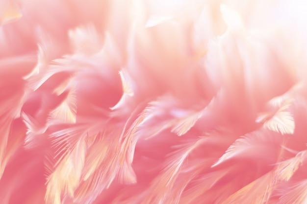 Texture de plume de poulet pour le fond Photo Premium