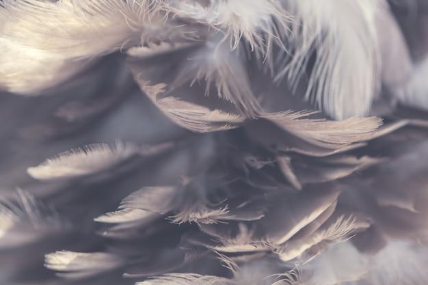 Texture de plumes de poulets pour le fond Photo Premium