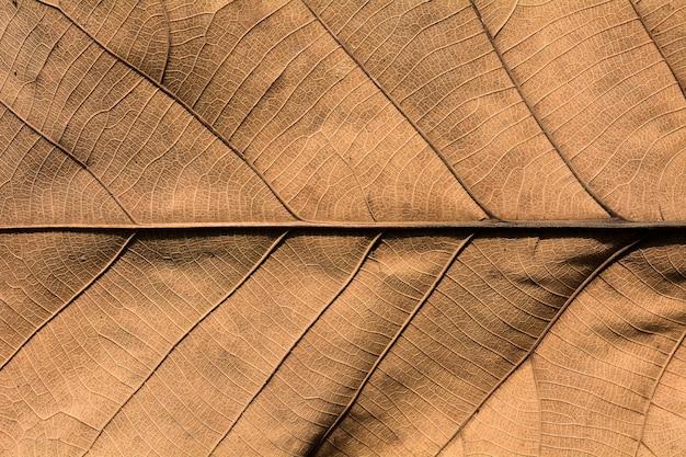 Texture sèche des feuilles marron Photo Premium