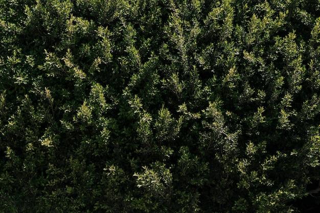 Texture de la végétation naturelle Photo gratuit
