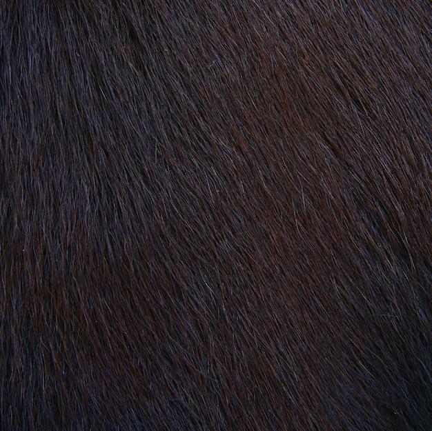 Texture velue de cheval, fourrure Photo Premium