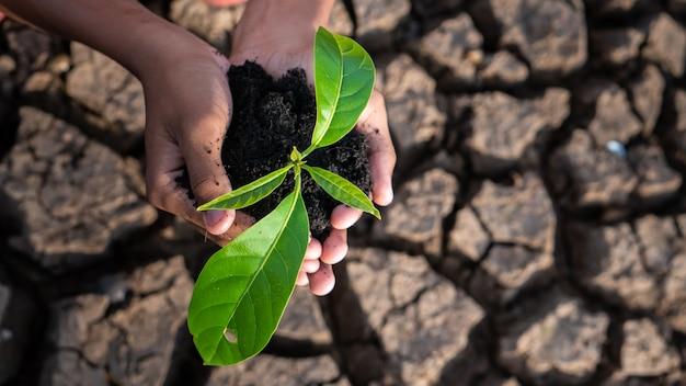 Thème du réchauffement global des mains humaines défendant l'herbe verte se levant d'un sol fissuré sans pluie. Photo Premium