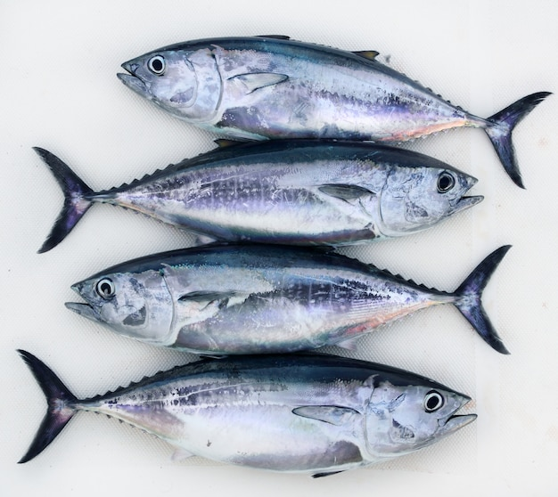 Thunnus thynnus, poisson thon rouge quatre thons Photo Premium