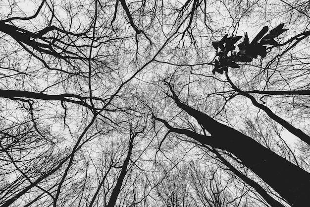 Tir à Faible Angle D'arbres Dans La Forêt Pendant La Journée Photo gratuit