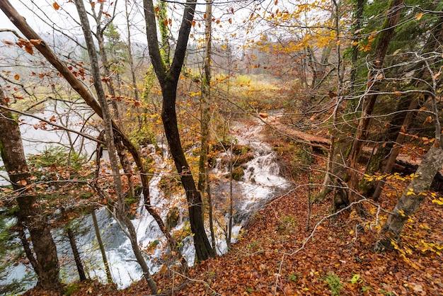 Tir De La Forêt D'automne Et De Courtes Cascades Dans Le Parc National Des Lacs De Plitvice, Croatie Photo gratuit