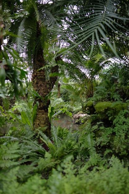 Tir Vertical D'arbres Verts Tropicaux Et De Nombreux Buissons Photo gratuit