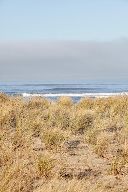 Tir Vertical De Beachgrass Le Matin à Cannon Beach, Oregon Photo gratuit