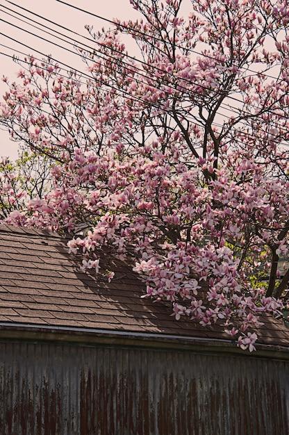 Tir Vertical D'un Bel Arbre Avec Des Fleurs De Cerisier Rose Près D'un Bâtiment Photo gratuit