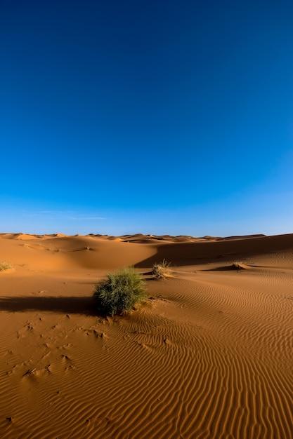 Tir Vertical De Dunes De Sable Avec Des Buissons Sous Un Ciel Bleu Clair Pendant La Journée Photo gratuit