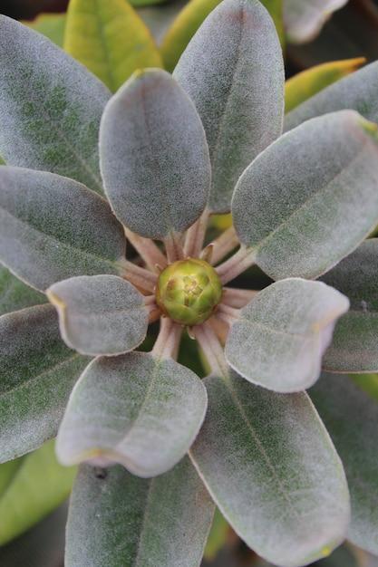 Tir Vertical De Feuilles De Rhododendron Photo gratuit