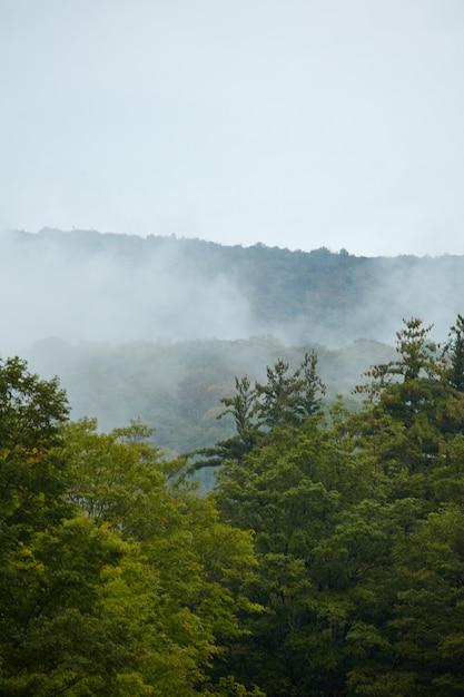 Tir Vertical De La Forêt De Green Mountain Couverte De Brouillard Dans Le Vermont Photo gratuit