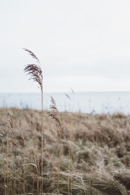 Tir Vertical D'une Herbe Sèche Poussant Sur Un Paysage Sous Un Ciel Nuageux Photo gratuit