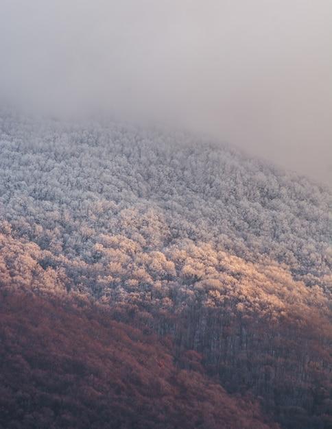 Tir Vertical D'une Montagne Dense Et D'un Ciel Brumeux Photo gratuit