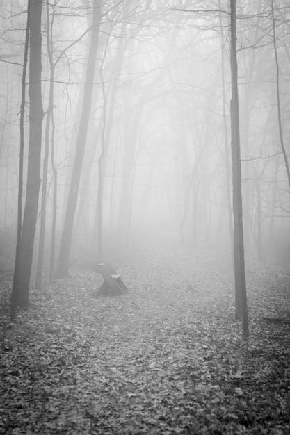 Tir Vertical D'un Mystérieux Paysage étrange D'une Forêt Enveloppée De Brouillard - Concept D'horreur Photo gratuit