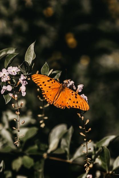 Tir Vertical D'un Papillon Orange Sur Une Brindille Photo gratuit