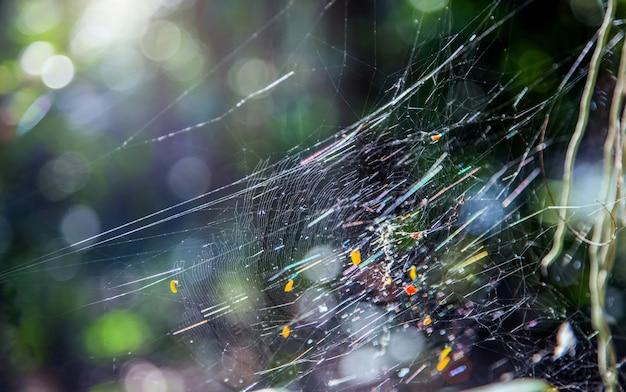 Toile D'araignée Sur Les Branches D'arbres Au Soleil Dans La Forêt D'été Photo Premium