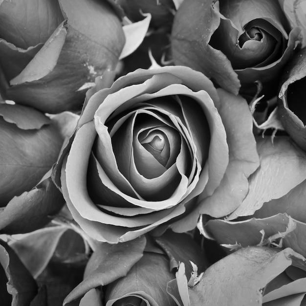 Toile De Fond Belle Novembre Bouquet De Fleurs Photo gratuit