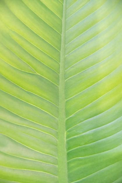 Toile de fond et texture de feuilles vertes naturelles Photo Premium