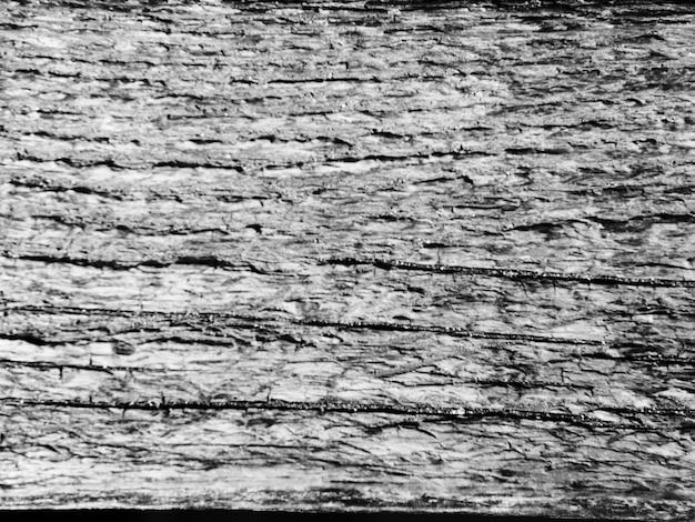 Toile de fond texturée de tronc d'arbre monochrome Photo gratuit