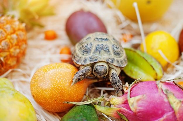 Tortue sur les fruits frais. Photo Premium