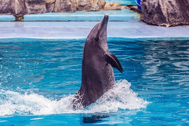 Les touristes profitent des vacances pour se détendre en regardant les représentations de dauphins et d'otaries au parc safari world, bangkok, thaïlande Photo Premium