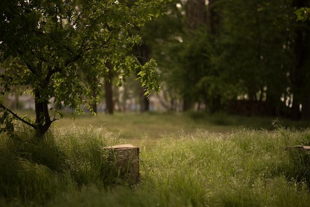 Tranche d'arbre sur le sol près de souche de mousse Photo Premium