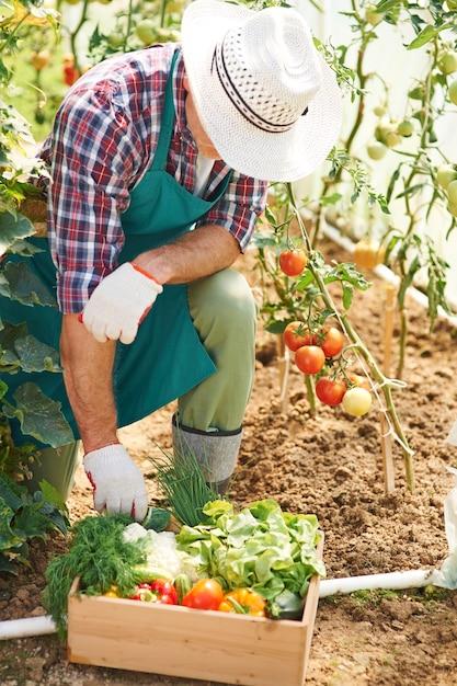 Le Travail Acharné Dans Le Jardin Donne Des Résultats Photo gratuit