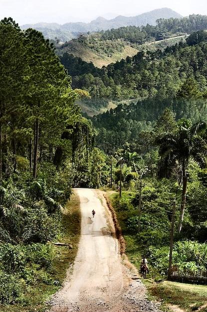 Trinidad cuba paysage route forestière nature Photo gratuit