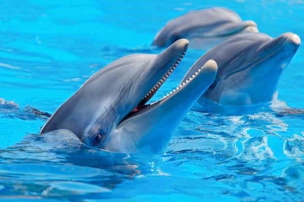 Trois beaux et drôles dauphins Photo Premium
