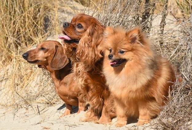 Trois chiens dans la nature Photo Premium