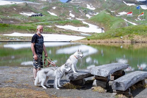 Trois Chiens Sont Assis. Un Troupeau De Husky Sibérien. Photo Premium