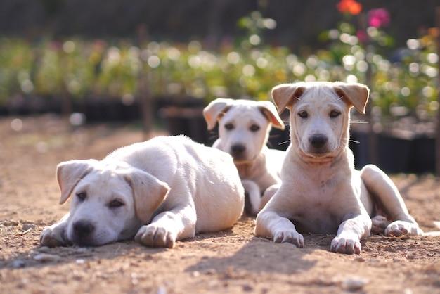 Trois chiens Photo Premium
