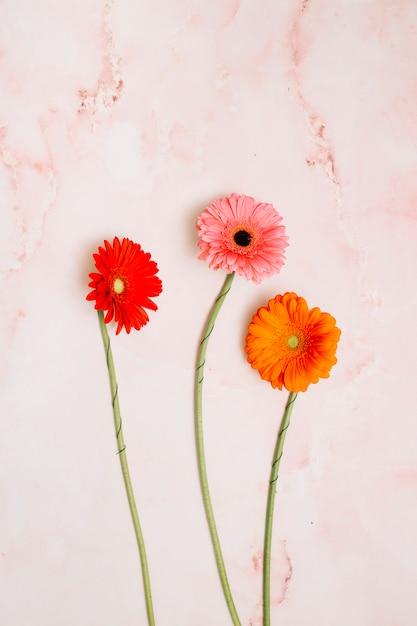 Trois fleurs de gerbera sur table Photo gratuit