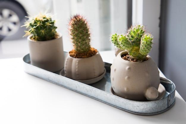 Trois petites fleurs de cactus sur tableau blanc Photo Premium